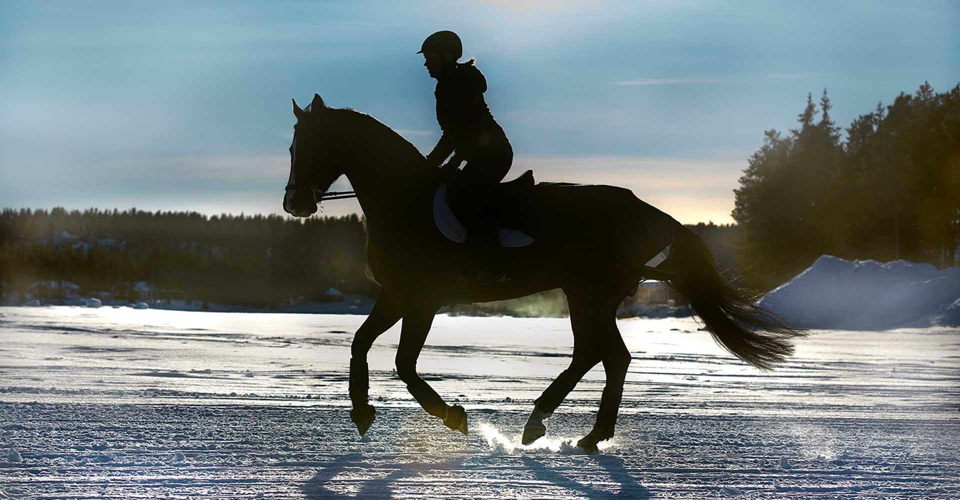 Pferdeartikel